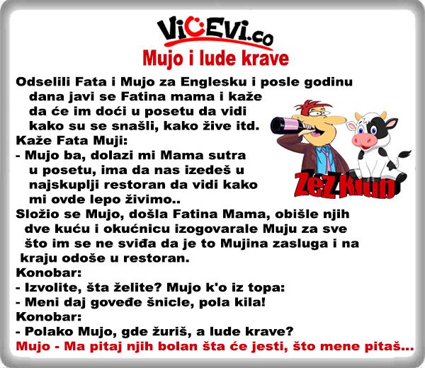 Mujo i lude krave @ vicevi o Bosancima, vicevi o Muji i Fati