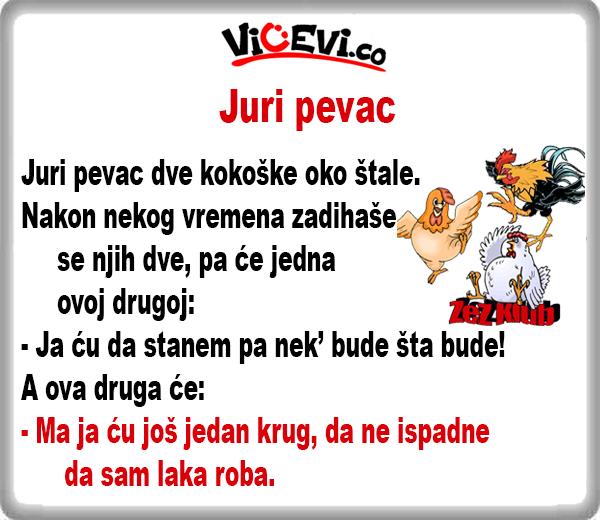 Juri pevac, 8 vicevi o Životinjama